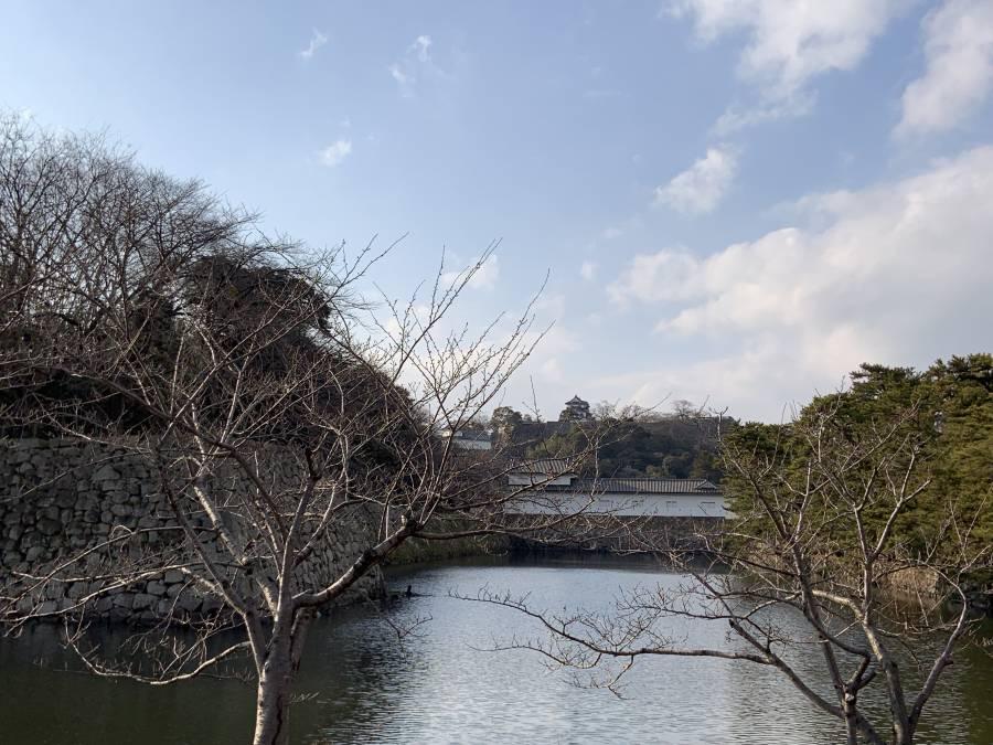 |彦根お天気ブログ| 冬から春にバトンタッチヽ(^o^)丿