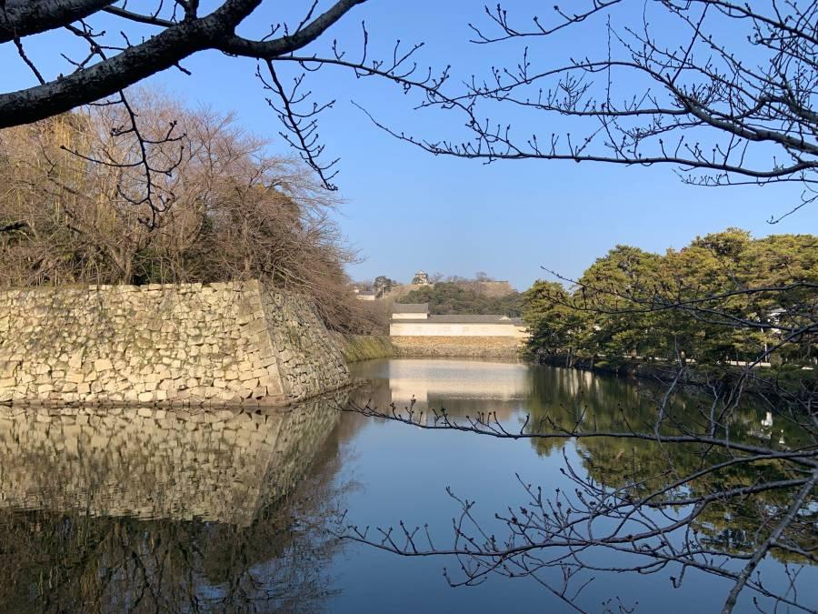 |彦根お天気ブログ| 桜の蕾状況(*^_^*)✿
