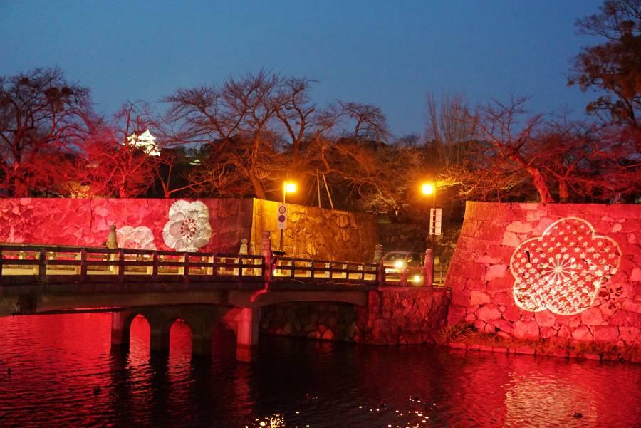 |彦根お天気ブログ| 彦根城が幻想的な「梅色」にライトアップされています