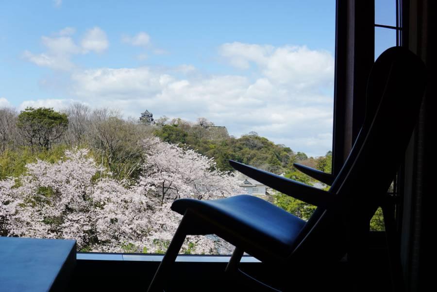 |彦根お天気ブログ| 贅沢な満開の桜との時間