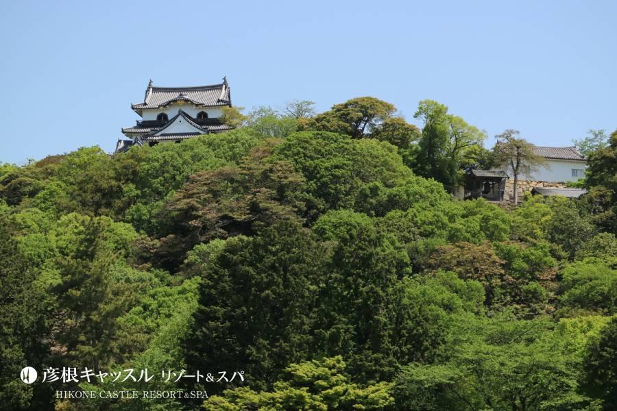 彦根城 しっくい壁の修復作業による通行止めについて