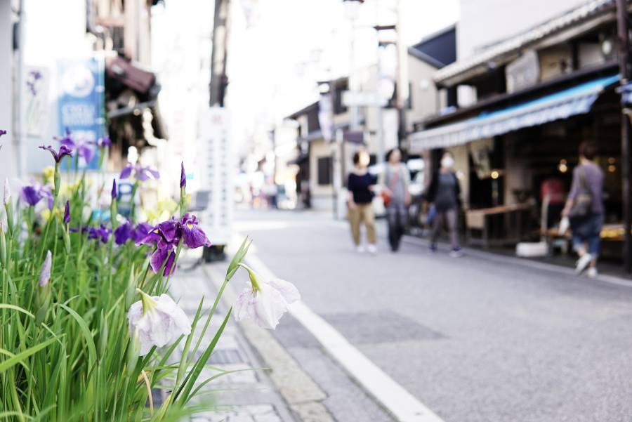 |お祭りイベント|  花しょうぶ通り アートフェスタ勝負市[毎年6月開催]