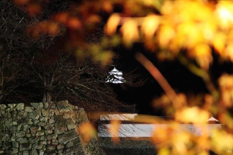 秋の彦根城ライトアップ(当ホテルより)