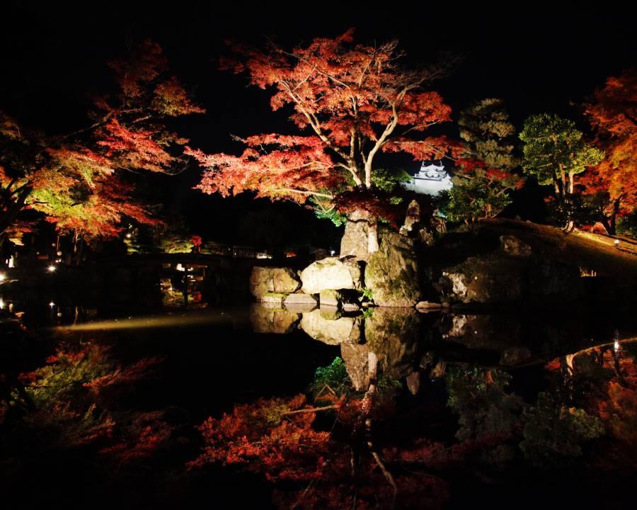 彦根城の幻想的な紅葉が楽しめるー錦秋の玄宮園ライトアップー 今月16日から、まもなく始まります!