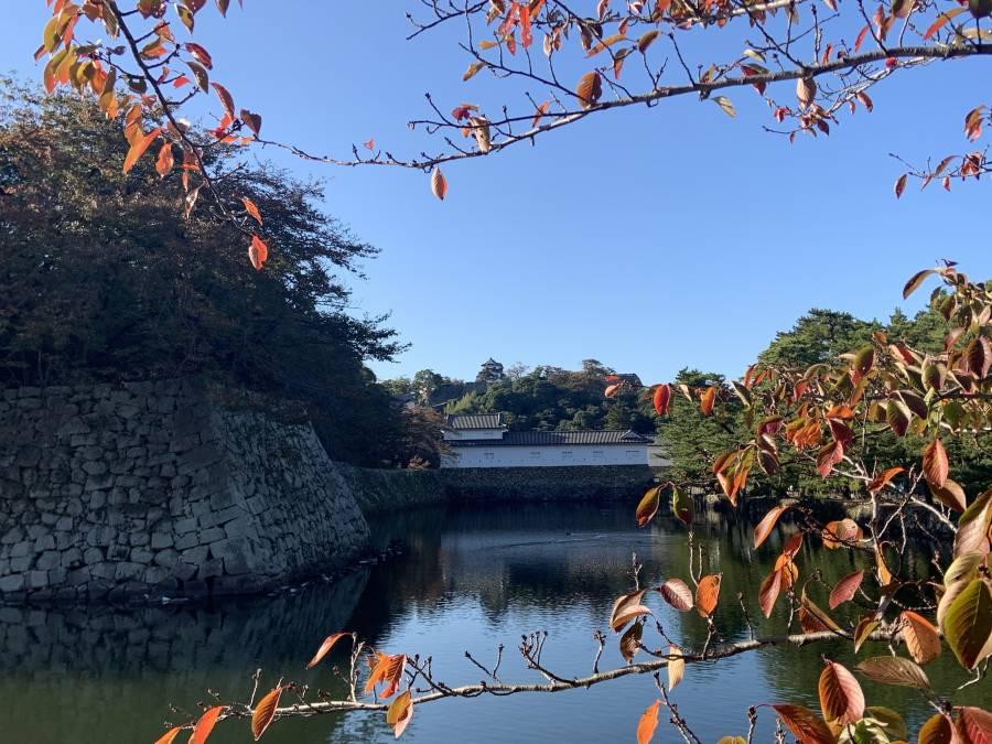 |彦根お天気ブログ|紅葉の色づく条件とは!(^^)!