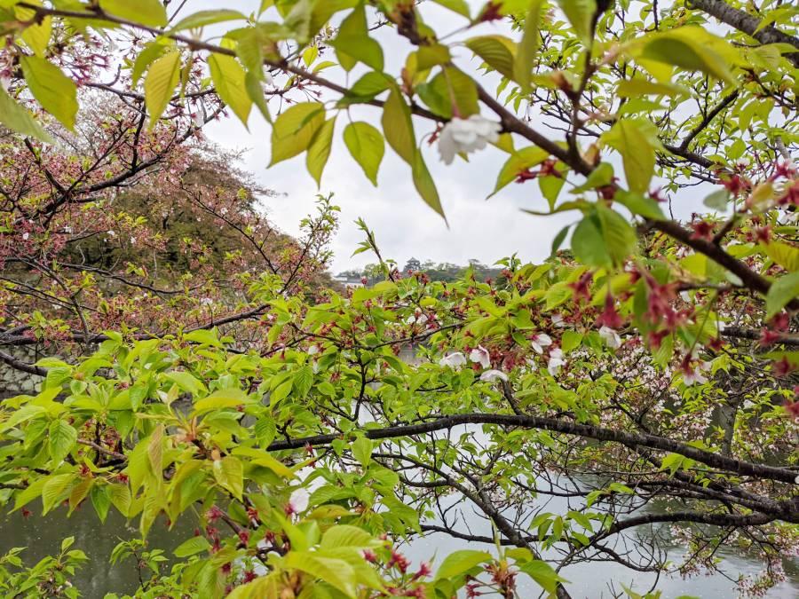| 彦根お天気ブログ | 雨で緑がキラキラ