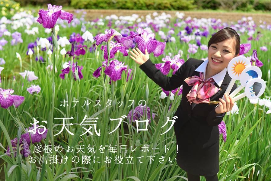 雨と花しょうぶ(●´ω`●)
